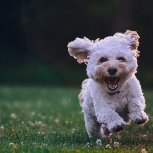 A dog running outside