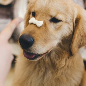 A dog balances a treat on its nose